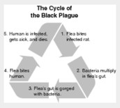 Cycle of Black Death