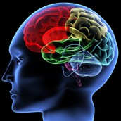 What is white matter?