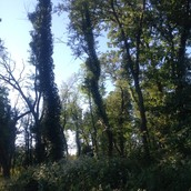 Crow Island Woods
