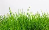 Grass ---->