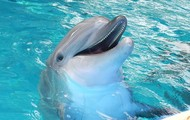 Smiling with a 'porpoise'