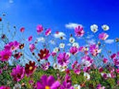 E' arrivata la primavera!!!!