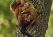http://livingsta.hubpages.com/hub/Endangered-Animals-of-the-Rainforest