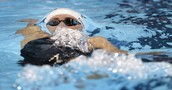 Natalie Coughlin taking on the backstroke event