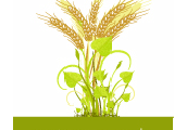 Great Greens & Grains