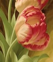 Spring Parrot Tulip