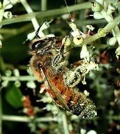 Decreased pollination