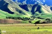 Yili Grasslands