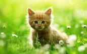 this cat is sooooo cute