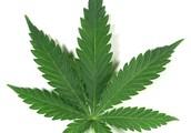 General things about Marijuana