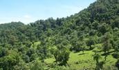 Más selva