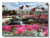 Swallowtail Falls