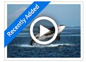 A Fall from Freedom: Sea Mammals in Captivity