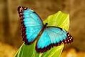 ¿Qué son la mariposas?