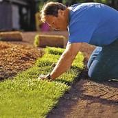 puting fertilizer in grass