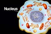 Nucleous