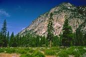 Explore Cedar Grove