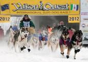 2012 Yukon Quest