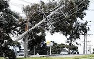 Power line fallen on tree