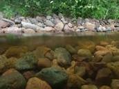 Crayfish Habitat