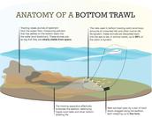 Bottom trawl