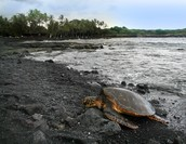 Home to the Endangered Species: the Green Turtle & the Hawksbill Turtle