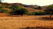 Komodo Dragon Habitat