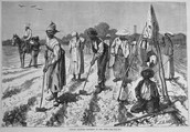 Slaves working in the fields