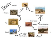 sahara desert food web