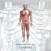 Главные системы в организме человека