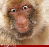 fun monkey .