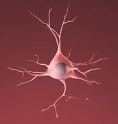 Healthy Neuron