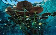 Long-Stemmed Water Lilies