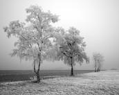 الأشجار في فصل الشتاء