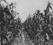 Our Crops