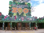 La Aurora Zoo Lo Mejor Que Cualquier Otro