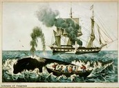Colonial Whaling