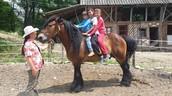 Caii de la Centrul Ecvestru Horse Spirit