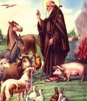 Feast Day of de San Antonio de Abad