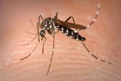 What is Dengue Fever?
