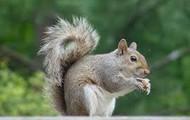 squirrule