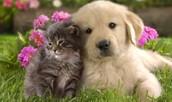 Duke and Mini