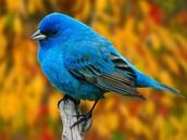 Its a chubby bird