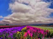 Flower bay