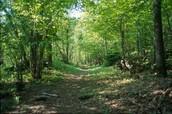 Temperat Forest