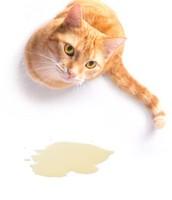 overmatig urineren