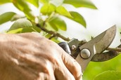 All You Have to Know About the Tree Trimming Service in Melbourne!