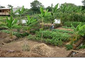 Architecture and also Permaculture - The Seamless Partnership!