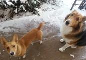 Meet Eevee & Lexy!
