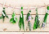 Are you curious about natural health and herbal medicine?